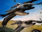 detail of pelicans