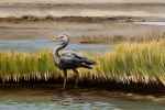 final great Blue Heron detail