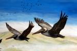 final gliding pelicans