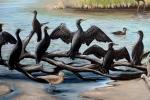 final cormorants