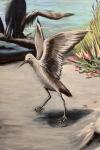final shorebird