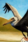 early study of a pelican(2)