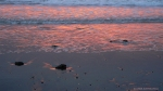 Beach reflections, (sunset, Ocean Beach,S.F.)