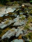 Creek (Samuel P.Taylor State Park,CA)