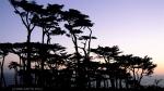cypress Sillouette (Land's End, Golden Gate Nat'l Park,SF)