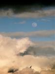 moon, clouds, bird