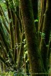 green rhythm (Samuel Taylor State Park,CA)
