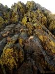 Lichen Boulders (Sierra-Nevada)