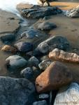 meandering rocks (Lands End, Golden GateNP)