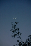 crescent moon above the branches