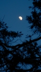 moon through theredwoods