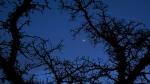 moon through thebrambles