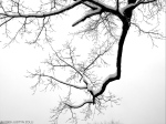 snowy branch (Massachusetts)
