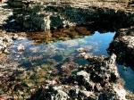 tidepool (Fitzgerald Marine Reserve,CA)